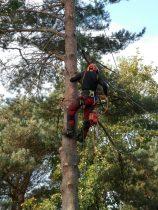 arboristi pihapuunkaato